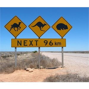 Road sign warning that camels - kangaroos and wombats may be up ahead