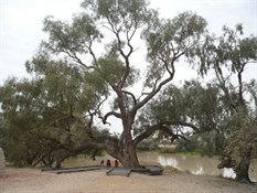 Bourke and Will's Dig Tree