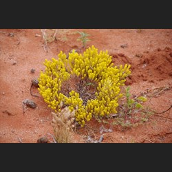 Other colours of Roxby Downs
