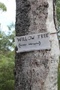 Willow Tree (Pajero Interuptus) - on the way to Gunshot