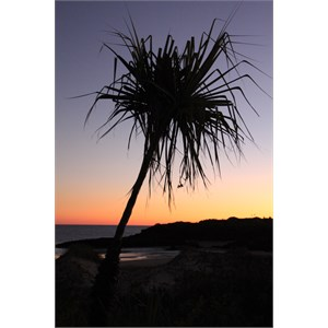 sunset with Pandanus