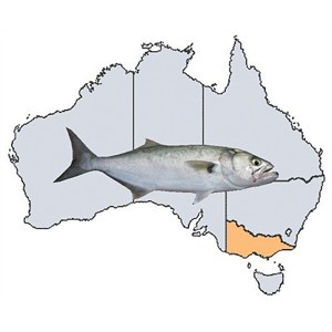 Fishing Spots in VIC