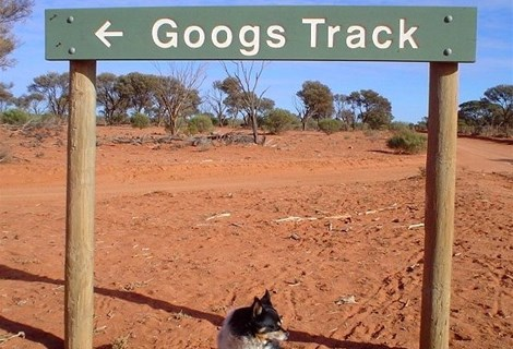 Googs Track